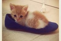 Sunny the Kitten